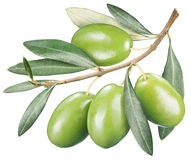 Green olives with leaves on a white background. Royalty Free Stock Photos