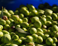 Green Olives in Natural Light Royalty Free Stock Photography