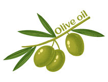 Green olives for oil Royalty Free Stock Photo