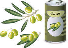 Green olives, olive branch and bank of olives. Isolated on white Stock Photos