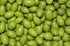 Green olives. Olive green, very good to be retained in brine or dunks with spices and spicy product from which we get a good oil Stock Image