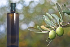 Green olives and bottle. Green olives on the tree with bottle of oil. Selective Focus Royalty Free Stock Photos