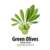 Green Olives vector logo design template. harvest Royalty Free Stock Photos