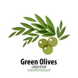Green Olives vector logo design template. harvest Stock Images