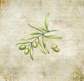 Green olives. Royalty Free Stock Photo
