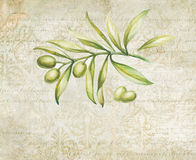 Green olives. Royalty Free Stock Photo