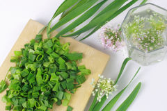Green onion. Whole and sliced scallions on the wooden plate. Blooming onion on white background Royalty Free Stock Images