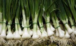 Green onion. On a shopbox Royalty Free Stock Photos