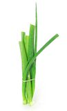 A green onion bunch Royalty Free Stock Images