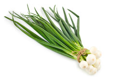 Green onion bunch Stock Image