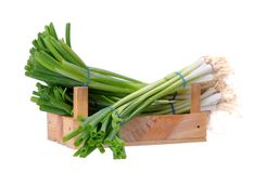 Green onion bunches Stock Image