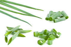 Green onion chopped slice Royalty Free Stock Images