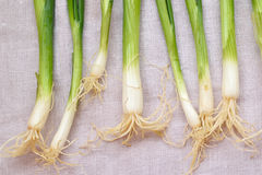 Green onion on the cloth Royalty Free Stock Photos