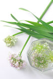 Green onion flowers. The flower of green onion on white background. Blooming onion Royalty Free Stock Images