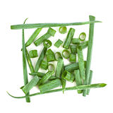 Green onion herb Stock Image