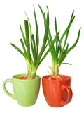 Green onion isolated Stock Photography