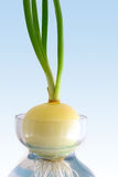 Green onion in jar with water Stock Photo