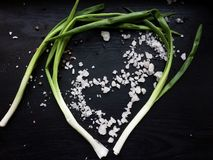 Green onion leaves Stock Photography