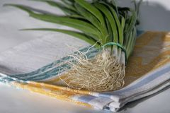 Green onion on linen napkin stock photo