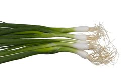 Green onion. S with roots isolated on white background Stock Image