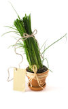 Green onion in pot with card Stock Images
