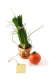 Green onion in pot with card Stock Image