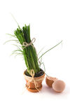 Green onion in pot with shell Stock Photography