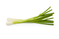 Green onion Royalty Free Stock Photos