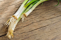 Green onion on wood Royalty Free Stock Images