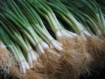 Green onions. In the Karmel market, Tel Aviv, Israel stock photos