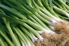 Green Onions. For sale at the farmer's market Royalty Free Stock Photo