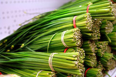 Green onions Royalty Free Stock Images