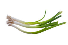 Green onions. Isolated on white background Stock Photos