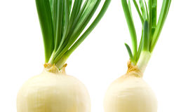Green onions. Two green onions isolated on white background royalty free stock photo