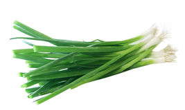 Green Onions. Bunch of green onions isolated on white Royalty Free Stock Image