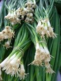 Green Onions. At Market Stock Image