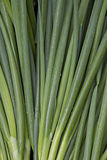 Green Onions Background Royalty Free Stock Photos