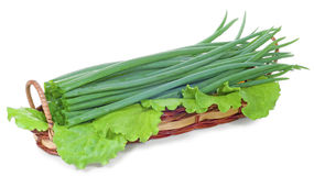 Green onions in the basket. The stem of onion and lettuce in a wicker basket, isolated on white background Stock Image