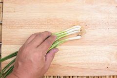 Green onions bunch with hand Royalty Free Stock Images