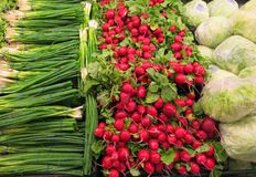 Green onions cabbage and radishes Stock Image