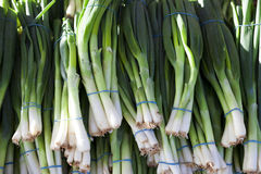 Green onions, fresh bundles lay on the counter of a village market. Royalty Free Stock Image