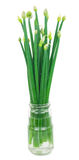 Green onions in a glass jar with water Royalty Free Stock Photos