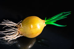 Green onions. Stock Photography