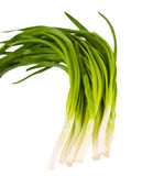 Green Onions Isolated Royalty Free Stock Image