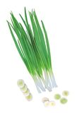 Green onions isolated on white Stock Photos