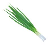 Green onions isolated on white Royalty Free Stock Photo