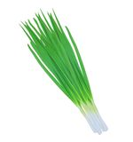 Green onions isolated on white Royalty Free Stock Image