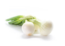 Green onions isolated on white background. Stock Photos