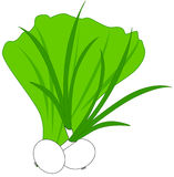 Green onions and lettuce Royalty Free Stock Images