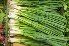 Green onions from market shelves real with flaws and Royalty Free Stock Photo
